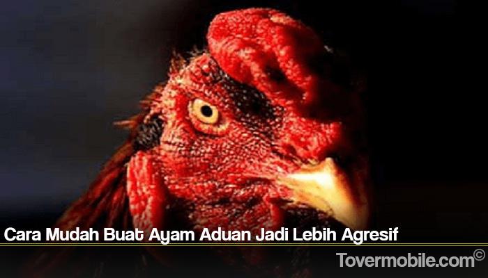 Cara Mudah Buat Ayam Aduan Jadi Lebih Agresif