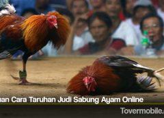 Panduan Cara Taruhan Judi Sabung Ayam Online