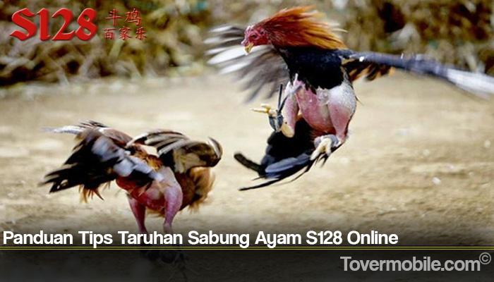 Panduan Tips Taruhan Sabung Ayam S128 Online