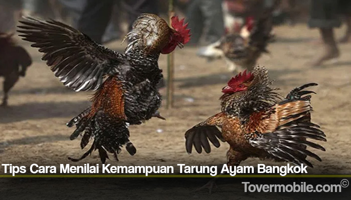 Tips Cara Menilai Kemampuan Tarung Ayam Bangkok